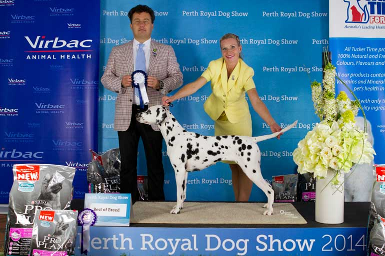 Alice - Perth Royal BOB with Judge