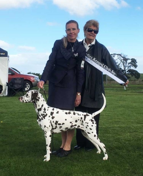 CCDalmatians Excels In The Show Ring – From Mildura To Colac In Victoria