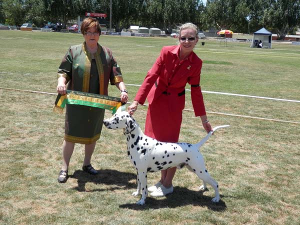 CCDalmatians succeed on the first weekend in 2013 at Kyneton Victoria