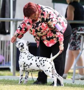 Boris-Baby-Puppy-In-Show-2015-(2)