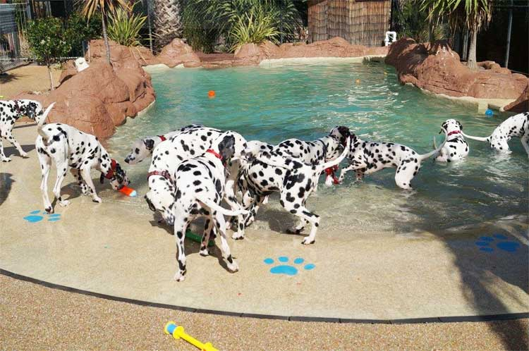 Puppy-Pool-Party--Pool-(2)--2017