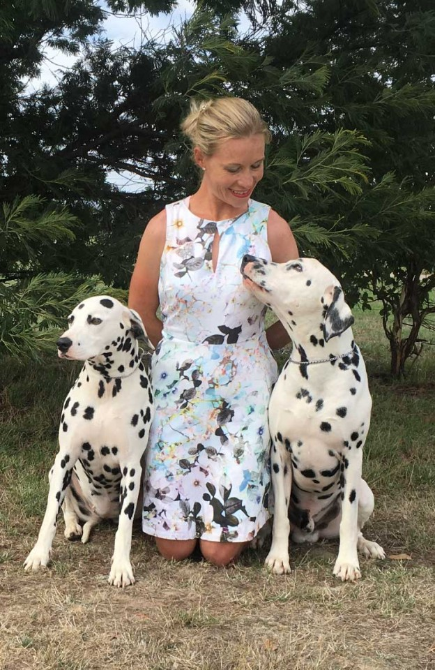 CCDalmatian Puppies Expected May 2017