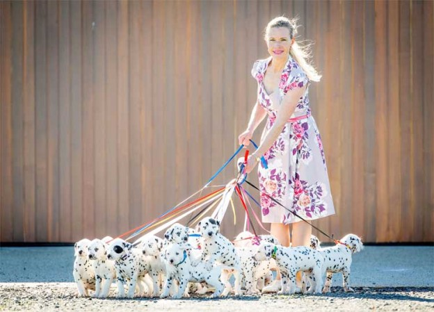 Internationally Famous CCDalmatians – 18 Puppies In One Litter