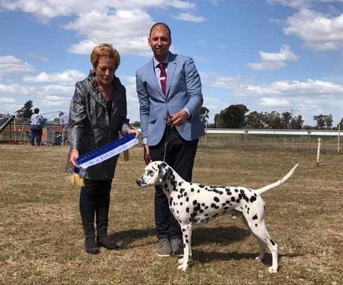 Group Winner Australian Champion CCDals Calvin Klein Iconic Fame JC ET