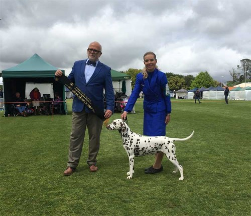 CCDalmatians Excels In The Show Ring Across Two States In Australia