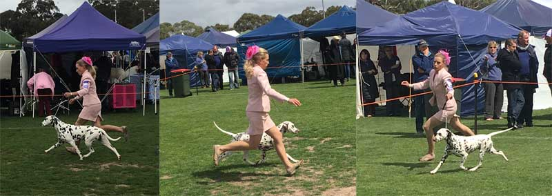Fashions-in-the-show-ring-2017-Sunbury