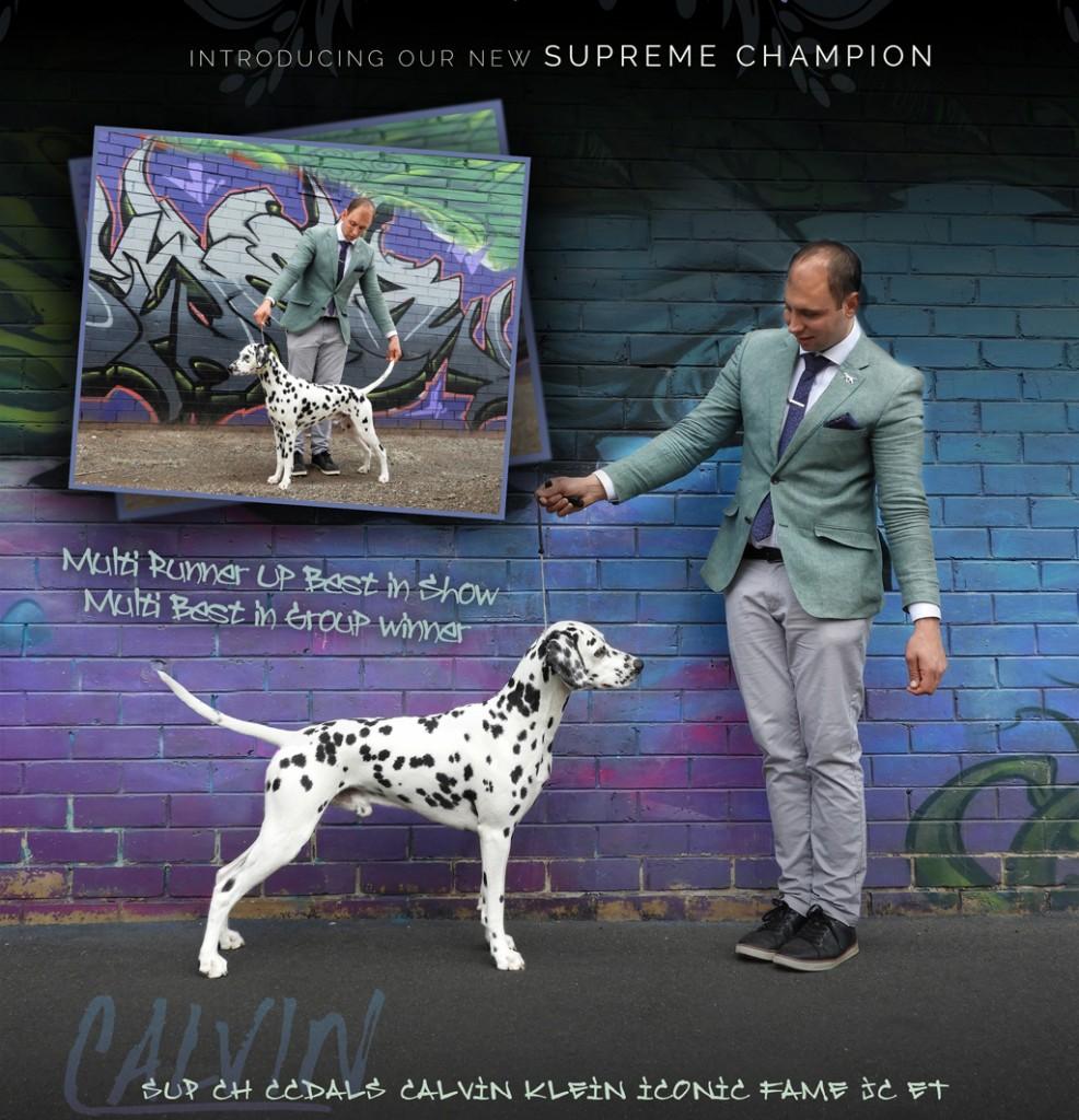 RUBIS Supreme Aust Ch CCDals Calvin Klein Iconic Fame JC ET