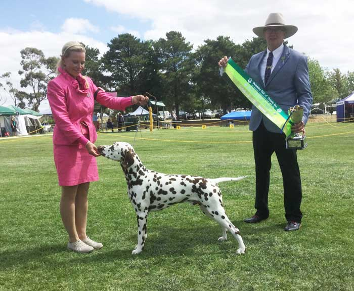 Flash-Puppy-In-Show-72nd-DCOV-Speciality-Champ-Show-2018