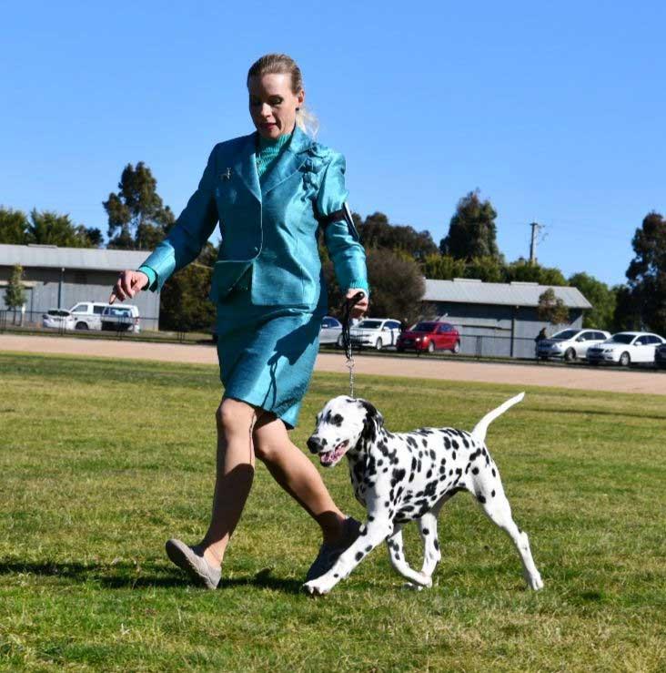Gucci-Puppy-Running