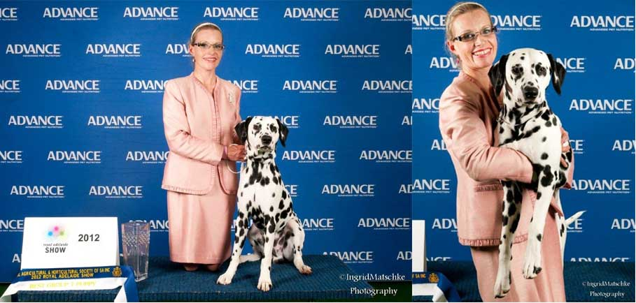 Apollo-Winning-Puppy-In-Group-Adelaide-Royal-2012